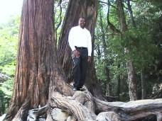 Conroy Trees 3